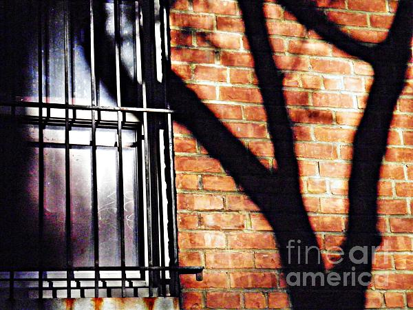 Wall Photograph - Shadow On The Wall by Sarah Loft