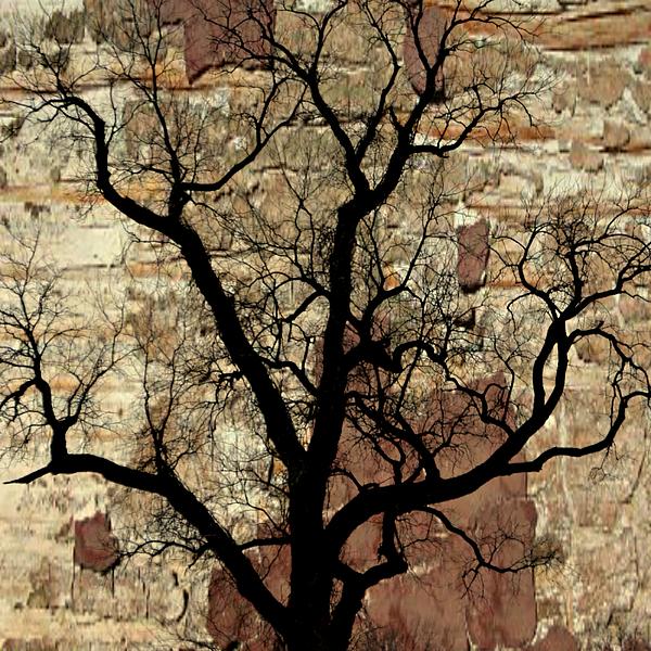 Tree Photograph - Shadow Wall by Marty Koch