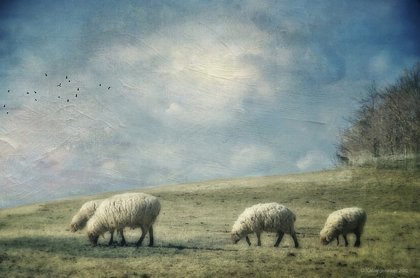 Sheep Photograph - Sheep On The Hill by Kathy Jennings
