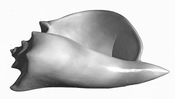 Seashell Sculpture - Shell Three by Katia Weyher