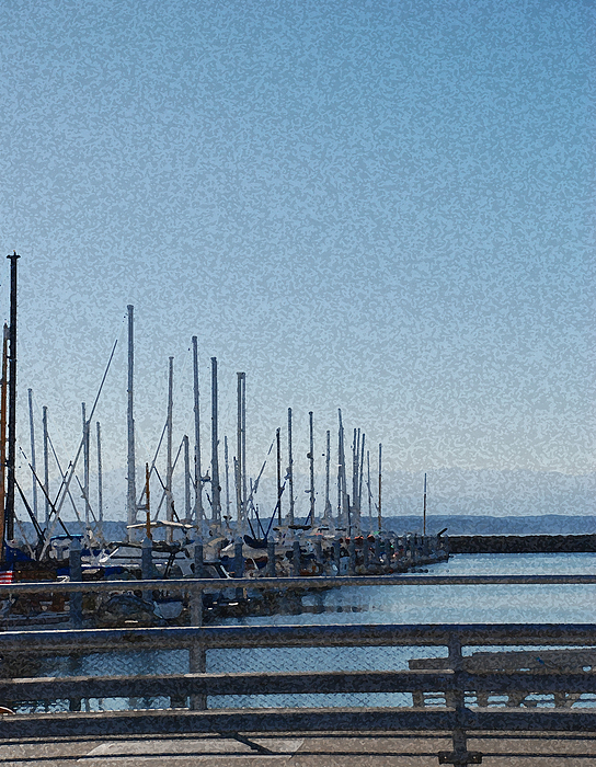 Sailboats Photograph - Shilshole Bay Marina 2010 by Carol  Eliassen