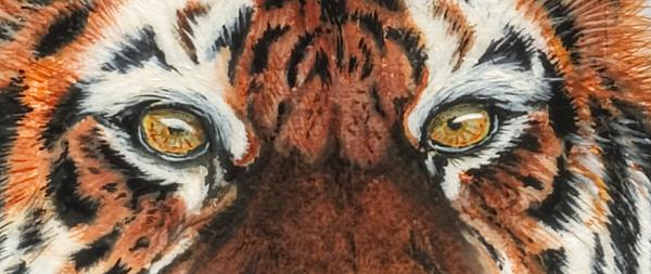 Tiger Eye Painting - Sib Tig Eye by Laurie Bath