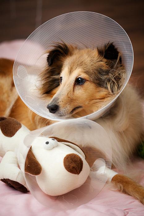 Animal Photograph - Sick Buddies by Kati Molin