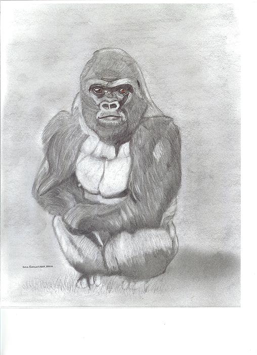 Silverback Gorilla Drawing by Don Gallacher