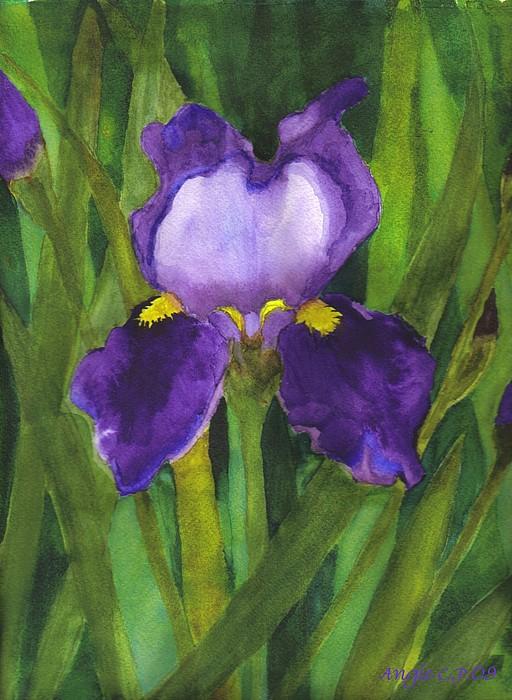 Flowers Painting - Single Iris by Angela Campo