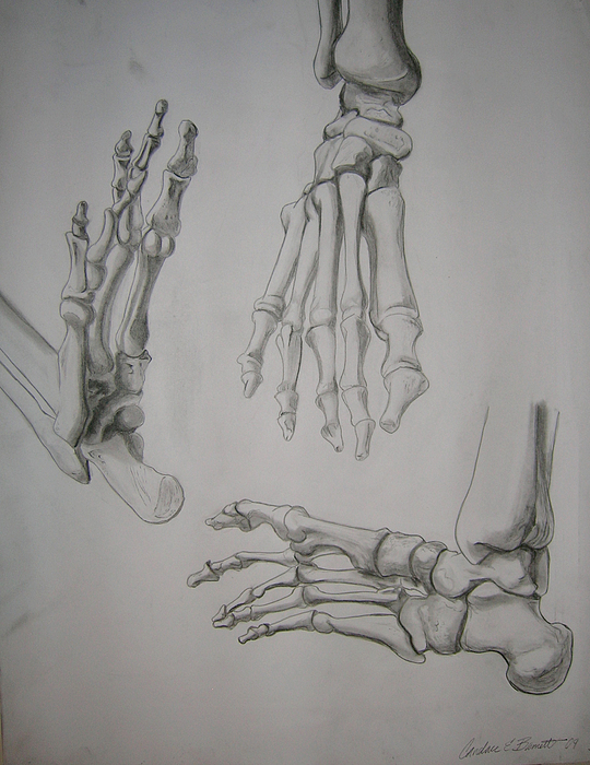 Foot Anatomy Drawings | Fine Art America