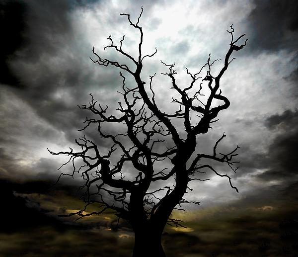 Tree Photograph - Skeletal Tree by Meirion Matthias