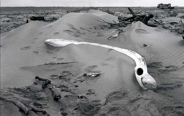 Skeleton Coast Photograph - Skeleton Coast Whalebone by Susan Chandler