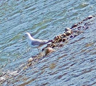 Sea Gull Photograph - Slanted Seagull by Heidi Olson