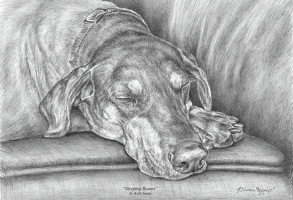 Doberman Drawing - Sleeping Beauty - Doberman Pinscher Dog Art Print by Kelli Swan