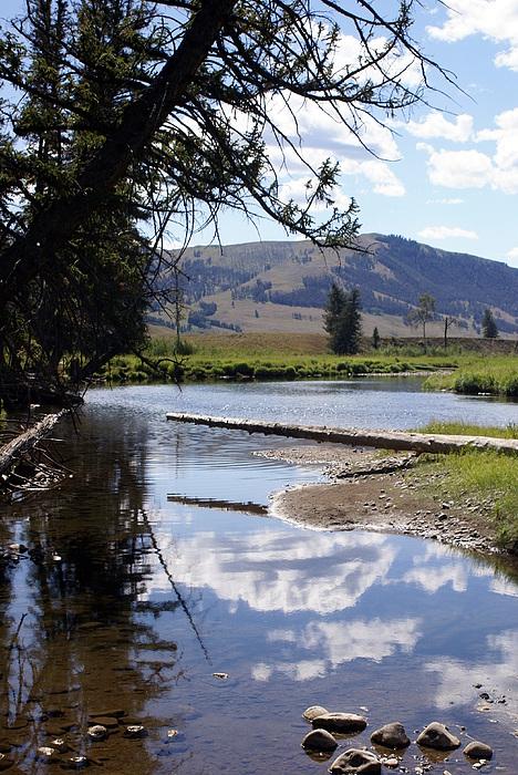 Slough Creek Photograph - Slough Creek 1 by Marty Koch