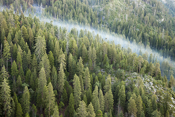 Sequoia National Park Photograph - Smoke In Forest by Rick Pham
