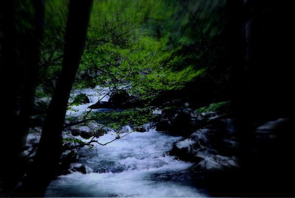 Creek Photograph - Smokey Mountain Creek by Martin Morehead
