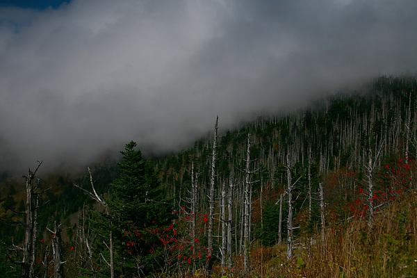 Smokey Mountains Photograph - Smokey Mountains by James Jones