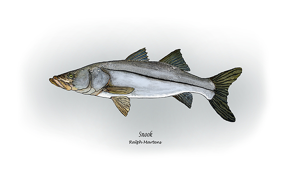 Snook Painting - Snook by Ralph Martens