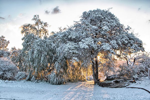 Jamul Photograph - Snow At Sunrise 1 by Peter Dyke