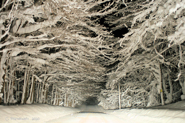 Snow Photograph - Snow Tunnel At Night by Carolyn Postelwait