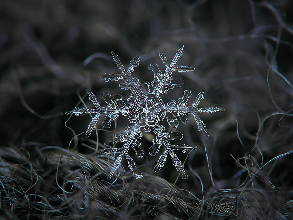 Snowflake Photograph - Snowflake 2 Of 19 March 2013 by Alexey Kljatov
