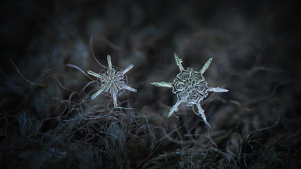 Snowflake Photograph - Snowflake Photo - When Winters Meets by Alexey Kljatov