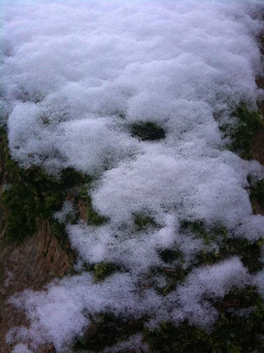 Winter Photograph - Snowman by Sara Efazat
