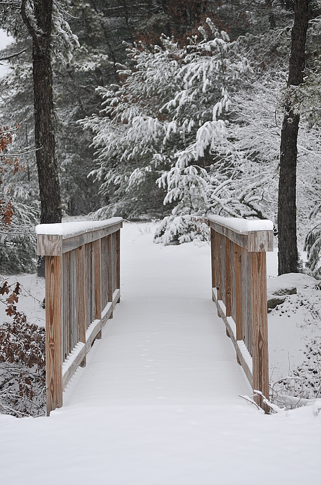 Winter Photograph - Snowy Path by Catherine Reusch Daley