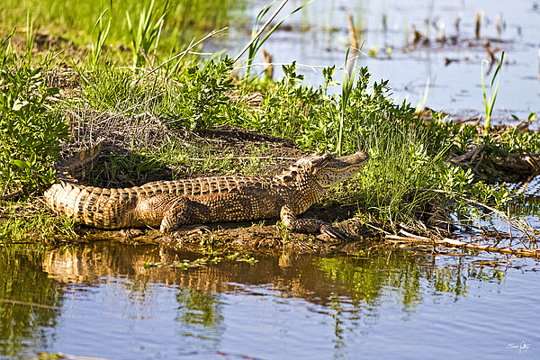 Animal Photograph - Soaking In The Sun by Scott Pellegrin