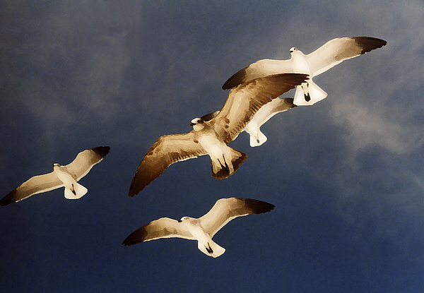Seagulls Digital Art - Soar by Ginger Howland