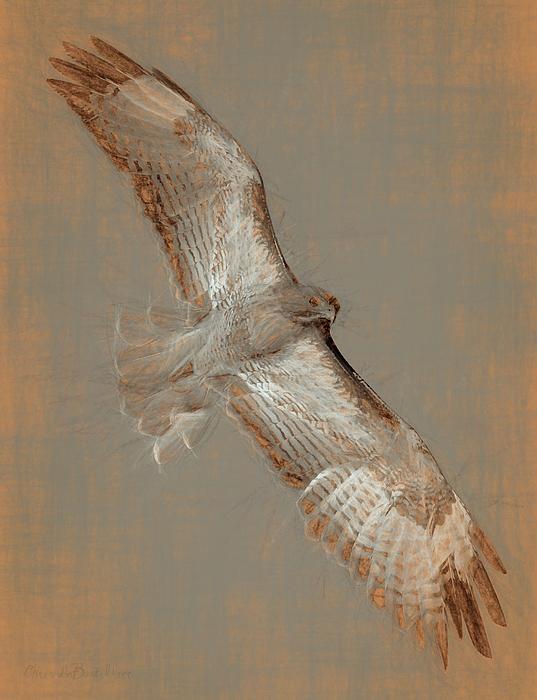 Soaring Hawk Digital Art - Soaring Hawk  by Chris LeBoutillier