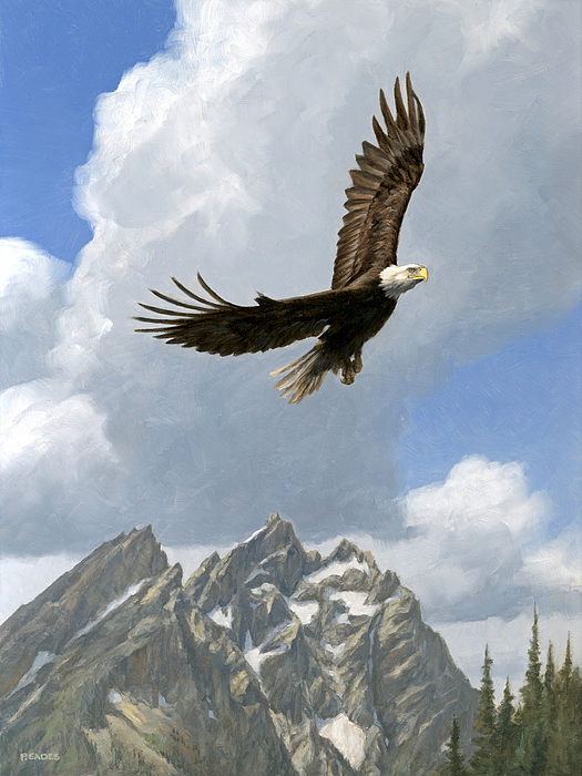 Soaring Golden Eagle Soaring Painting by Pe...