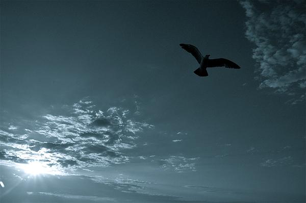 Birds Photograph - Soaring by Valerie Rosen