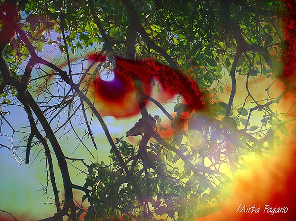 Sol Natural Photograph by Mirta Pagano