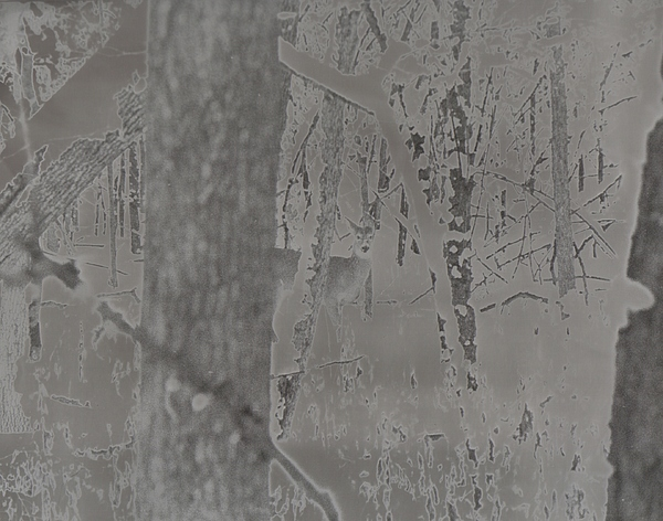 Photo Photograph - Solarized Deer by Rebecca Volke