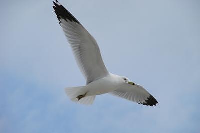 Birds Photograph - Solo Flight by Chris Jones