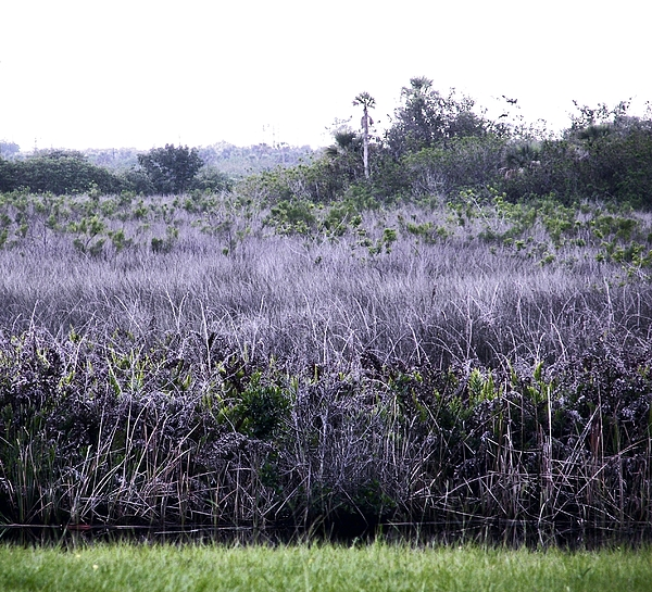 Florida Landscape Photograph - South Florida Marsh Magnificence by Charles Peck