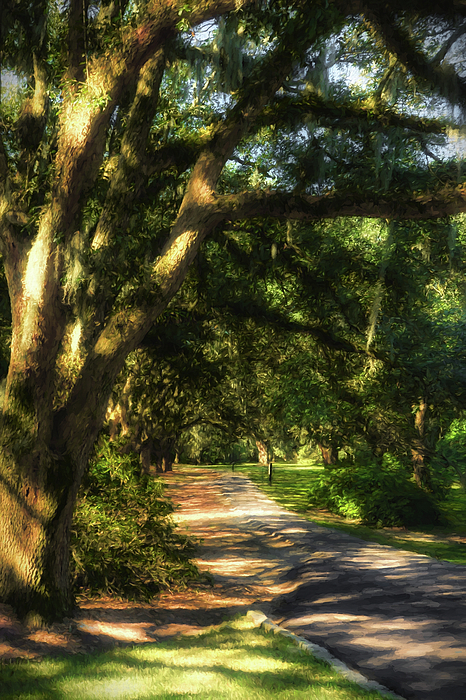 Nature Photograph - Southern Sunshine by Mel Steinhauer