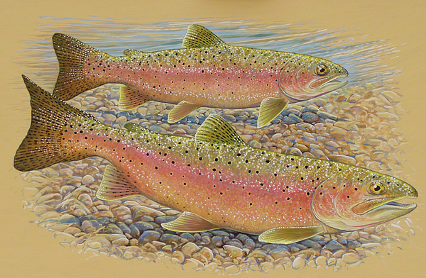 Trout Painting - Spawning Trout by Shari Erickson