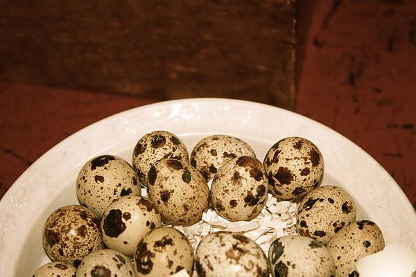 Paula Deutz - Speckled Eggs
