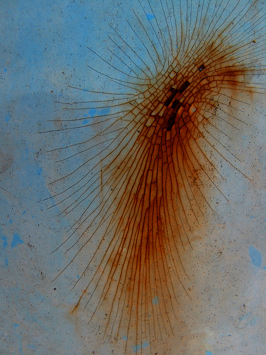 Lines Photograph - Spidery by Elizabeth McPhee