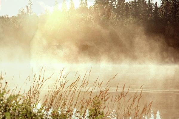 Spirit Photograph - Spirit Wolf by Peter Pauer