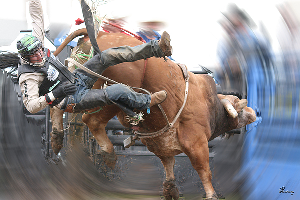 Cowboy Bull Riding Cow Rodeo Falling Entertainment  Photograph - Split by Andrea Lawrence