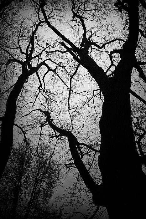 Trees Photograph - Spooky by Ken Myrk