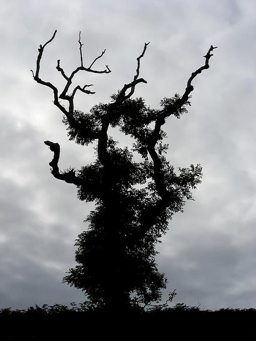 Tree Photograph - Spooky Tree by Mary Lane