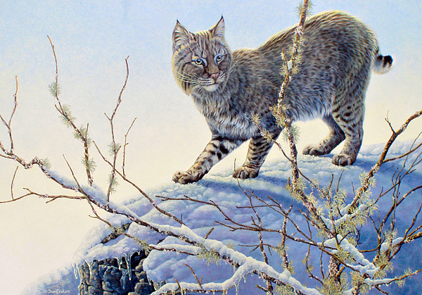Bobcat Painting - Spotted by Shari Erickson