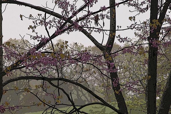 Spring Digital Art - Spring by Burton Floyd