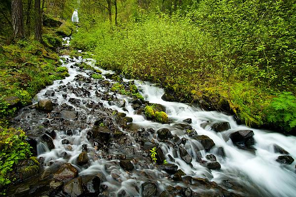 Cascades Photograph - Spring Cascades by Mike  Dawson