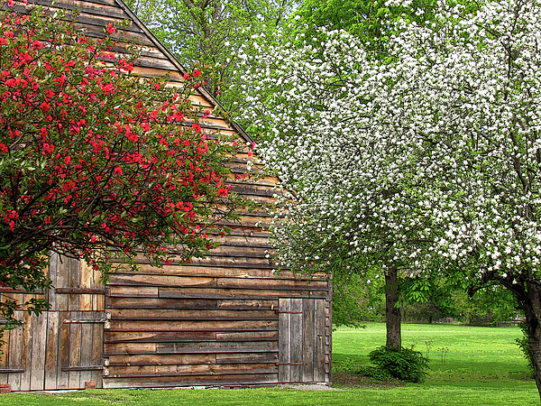 Flowers Photograph - Spring Flowers And The Barn by Nancy De Flon