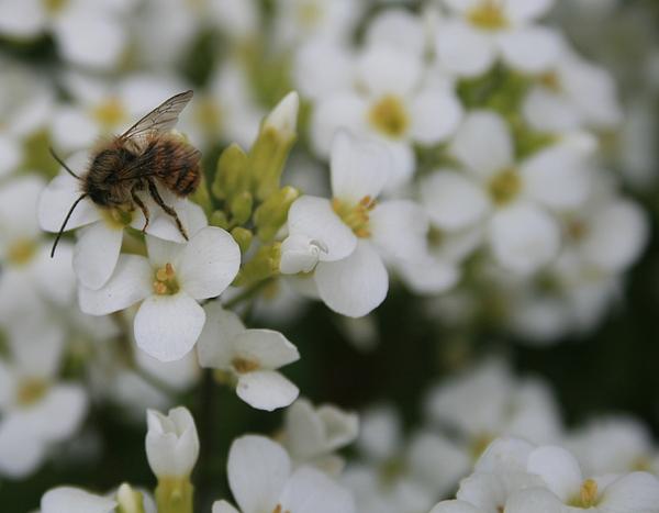 Flower Photograph - Spring by Marta Grabska