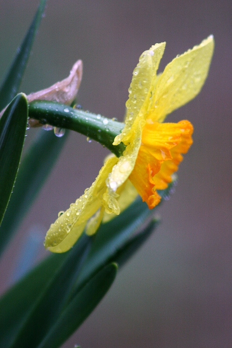 Spring Rain Photograph by Linda Russell