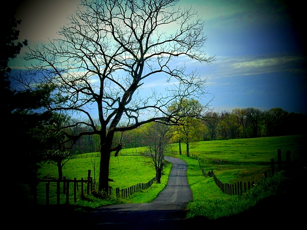Country Road Photograph - Spring Road by Michael L Kimble