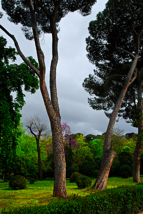 Storm Photograph - Spring Storm Over Park Retiro by Georgia Nick